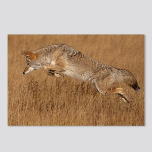 Coyote Flying Postcards (Package of 8)