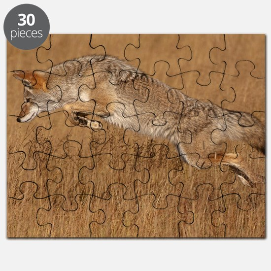 Coyote Flying Puzzle