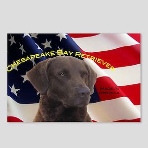 chesapeake Bay retriever Postcards (Package of 8)