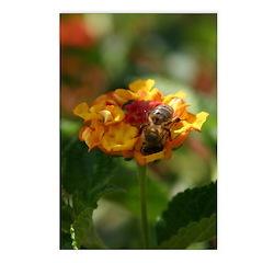 Honeybee on Lantana bloom Postcards (Package of 8)