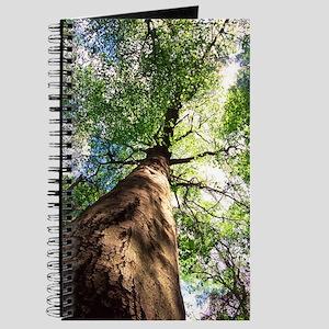 Beech Tree Journal