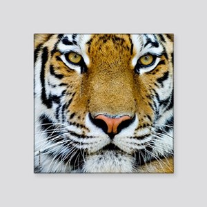 "Tiger Square Sticker 3"" x 3"""