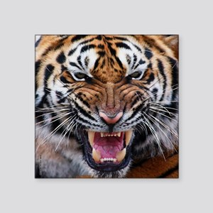 """Big Cat Tiger Roar Square Sticker 3"""" x 3"""""""