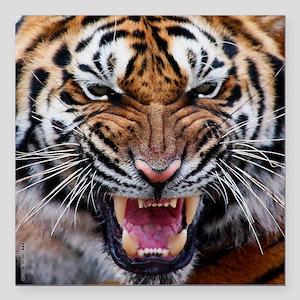 """Big Cat Tiger Roar Square Car Magnet 3"""" x 3"""""""