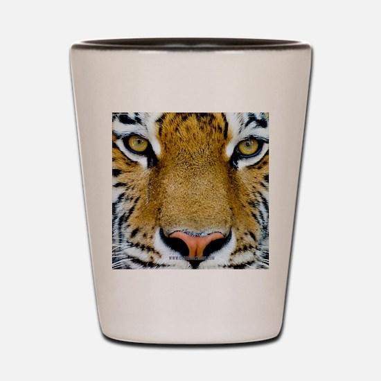 Big Cat Tiger Roar Shot Glass