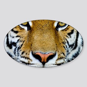 Big Cat Tiger Roar Sticker (Oval)
