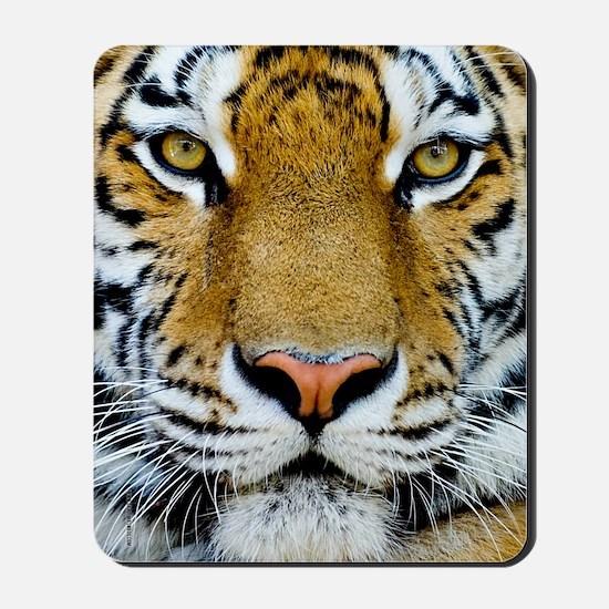 Big Cat Tiger Roar Mousepad