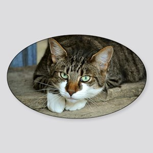 Cat White Paws Green Eyes Sticker