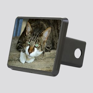 Cat White Paws Green Eyes Hitch Cover