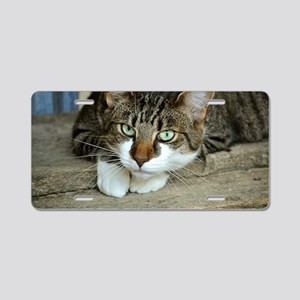 Cat White Paws Green Eyes Aluminum License Plate