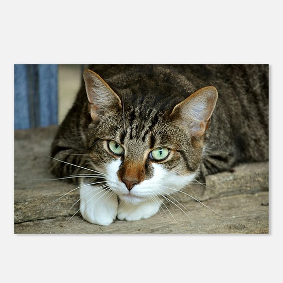 Cat White Paws Green Eyes Postcards (Package of 8)