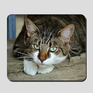 Cat White Paws Green Eyes Mousepad