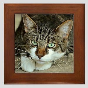 Cat White Paws Green Eyes Framed Tile