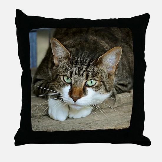 Cat White Paws Green Eyes Throw Pillow