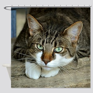 Cat White Paws Green Eyes Shower Curtain