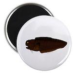 Black Brotula Magnets