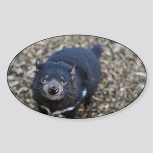 Tasmanian Devil Sticker (Oval)