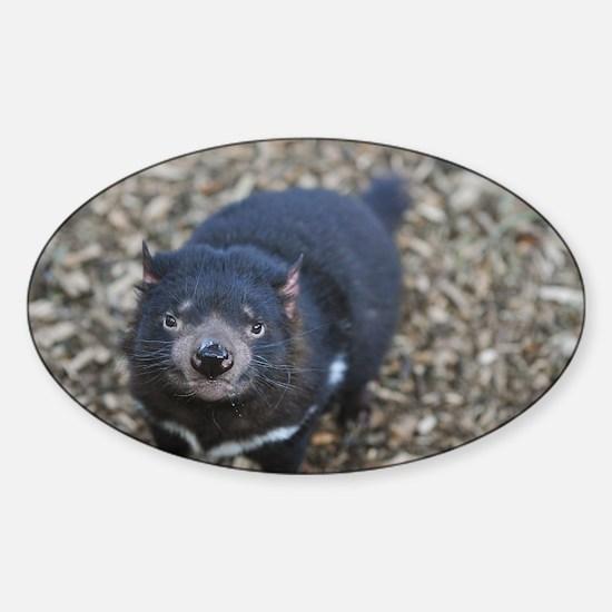 Tasmanian Devil Sticker (Oval)