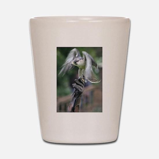 Falconry Shot Glass
