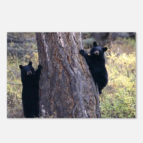 black bear cubs Postcards (Package of 8)
