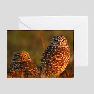 burrowing owl couple Greeting Card