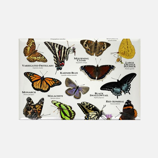 Butterflies of North America Rectangle Magnet