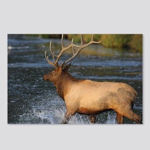 elk splashing in the wate Postcards (Package of 8)
