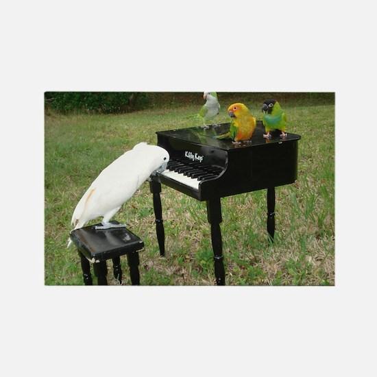 Pianist Parrots Magnets