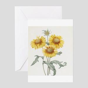 vintage botanical art three sunflowers. Redoute bo
