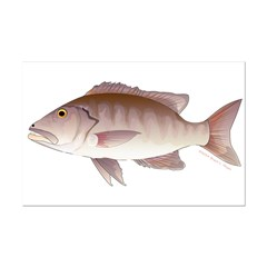 Cubera Snapper Posters