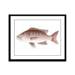 Cubera Snapper Framed Panel Print