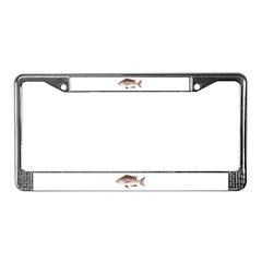 Cubera Snapper License Plate Frame