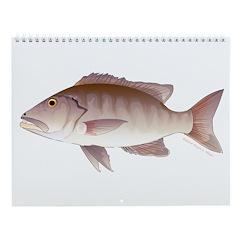 Snapper And Grouper Wall Calendar