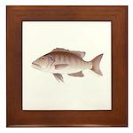 Cubera Snapper Framed Tile