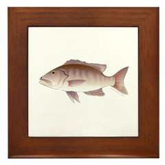 Cubera Snapper Framed Tile