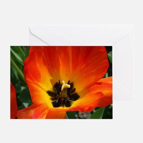 Orange Flower Greeting Card