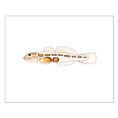 Orangesided Goby Posters