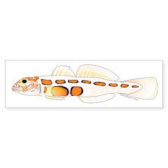 Orangesided Goby Bumper Bumper Sticker