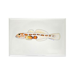 Orangesided Goby Magnets