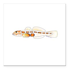 Orangesided Goby Square Car Magnet 3