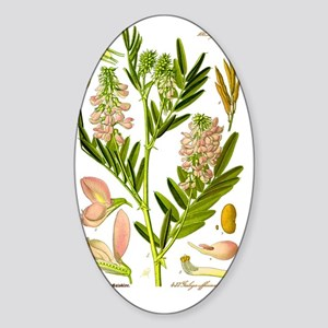 Herbalist  Sticker (Oval)