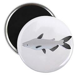 Mekong Giant Catfish Magnets