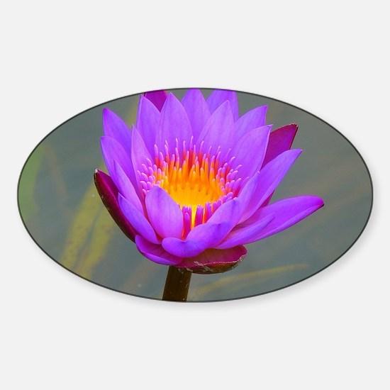 Purple Lotus Flower Sticker (Oval)