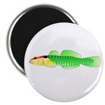 Greenbanded Goby Magnets