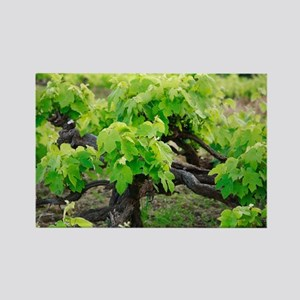 Grape vines Rectangle Magnet