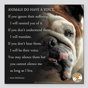 "VOICE OF ANIMALS Square Car Magnet 3"" x 3"""