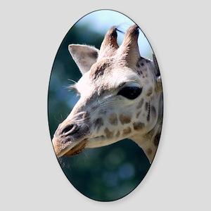 Giraffe Mens Shoes (right) Sticker (Oval)