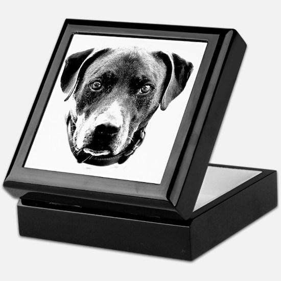 Pit Bull Portrait Keepsake Box