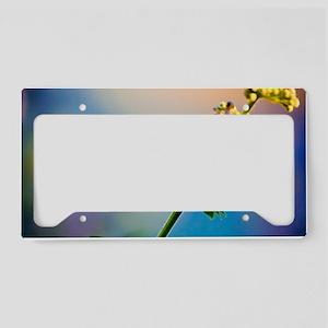 Pollination  License Plate Holder