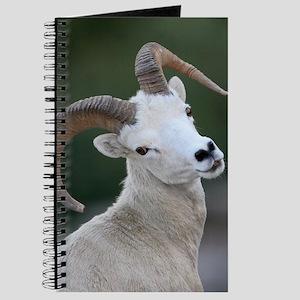 Dall Sheep, Ram Journal